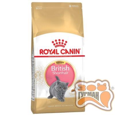 купити Royal Canin British Shorthair Kitten корм для кошенят Британської породи от 4-12 місяців в Одеси