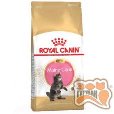 Royal Canin Maine Coon Kitten для кошенят породи мейн-кун віком до 15 місяців