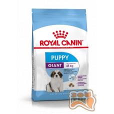 Royal Canin GIANT PUPPY для цуценят собак дуже великих порід