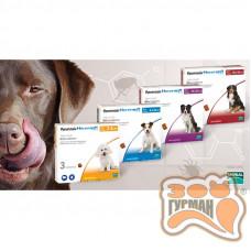 NexGard (Нексгард) Таблетки від бліх і кліщів для собак, 1 табл